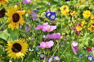 5 einfache Schritte zu deinem Bienenparadies