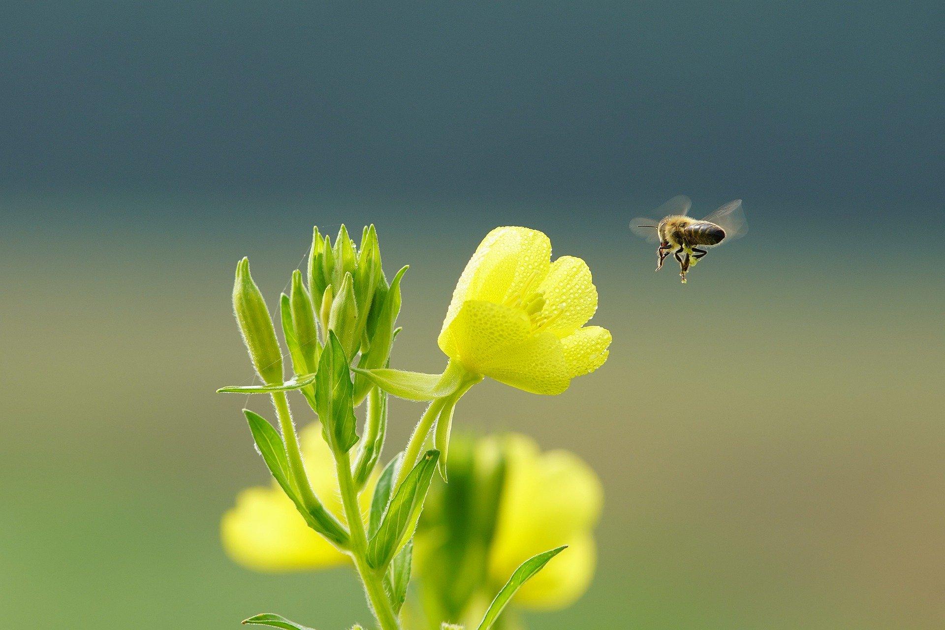 Neue Fähigkeit bei Blumen entdeckt!