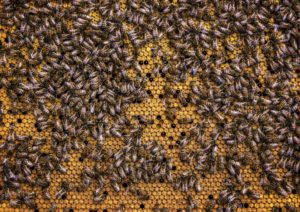 Verzögerte Larvenentwicklung durch Pestizide!